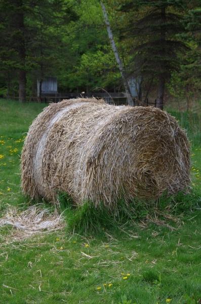 高速道路上で撮った牧草ロール