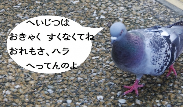 福岡市動植物園 鳩