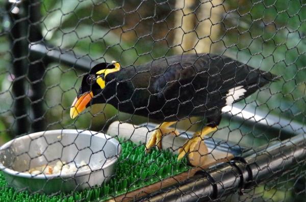札幌 円山動物園 九官鳥?