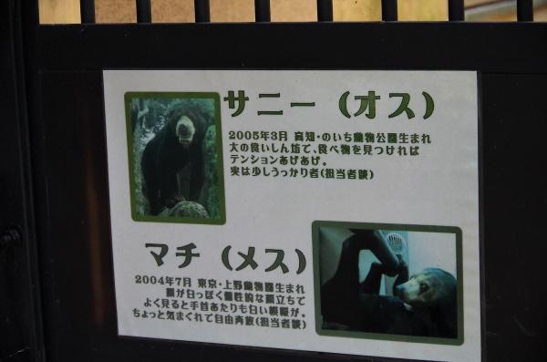 福岡市動物園 マレーグマ サニー♂ マチ♀