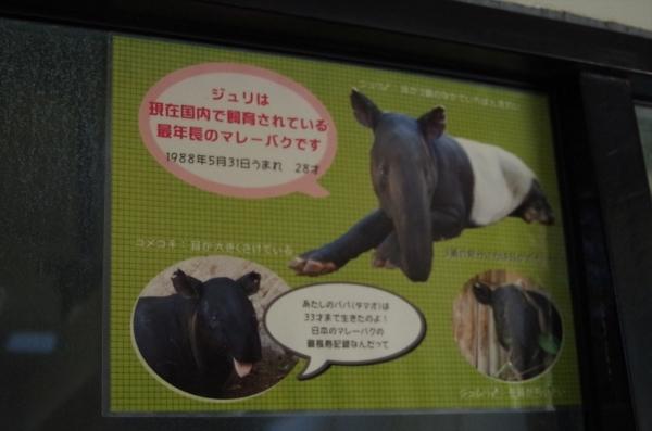 福岡市動物園のマレーバク ジュリ君