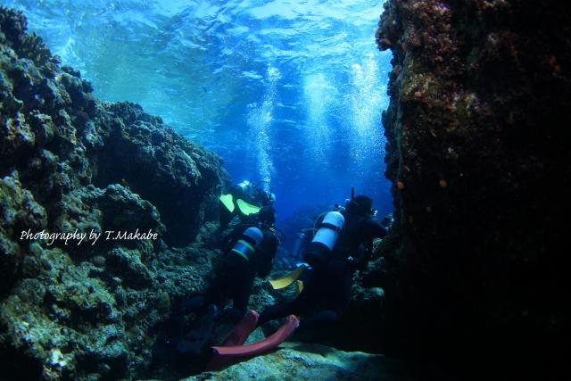 沖縄慶良間諸島久場島の水中景観2