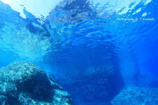 慶良間諸島久場島の水中景観