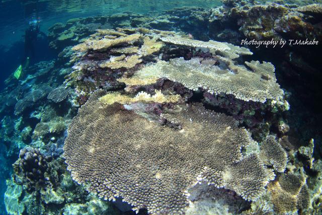 20-1★座間味島のサンゴ群