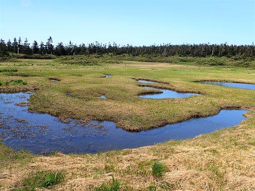 八幡平の湿原20170626