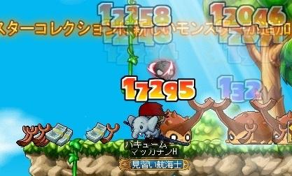 Maple16396a.jpg