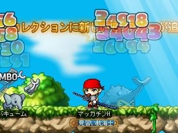 Maple16397a.jpg