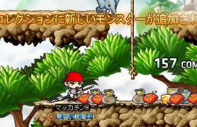 Maple16402a.jpg