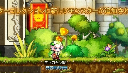 Maple16429a.jpg