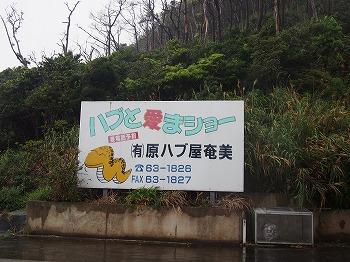 amamiooshima653.jpg