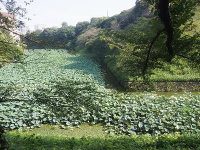 chiyodaku297.jpg