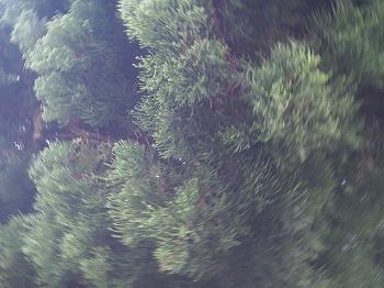 kakeroma131.jpg