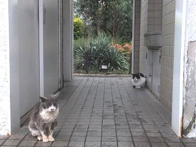 okubo-street16.jpg