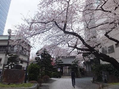 shinjuku-street230.jpg