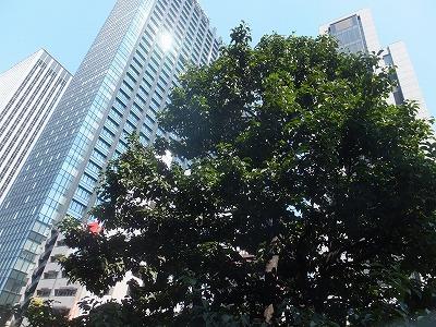 shinjuku-street292.jpg