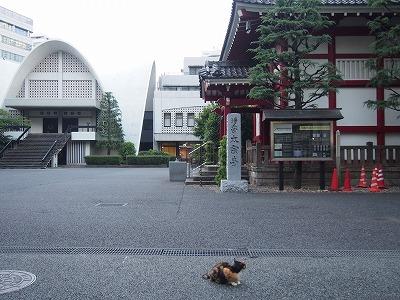 shinjuku-street319.jpg