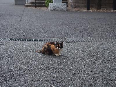 shinjuku-street320.jpg