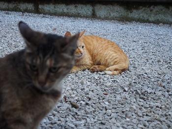 shinjuku-street325.jpg