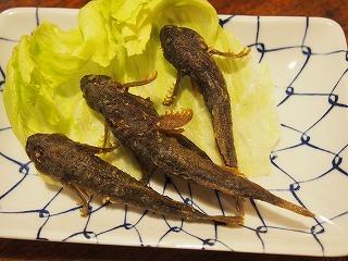 uonuma-tsuruya72.jpg