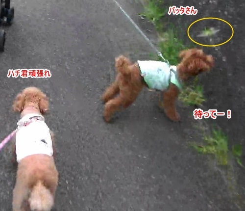sカート結合ラスト(2)