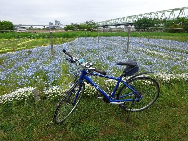 サイクリング荒川2017-5 (1)