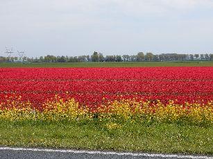 オランダ3日目@NIKON (139)