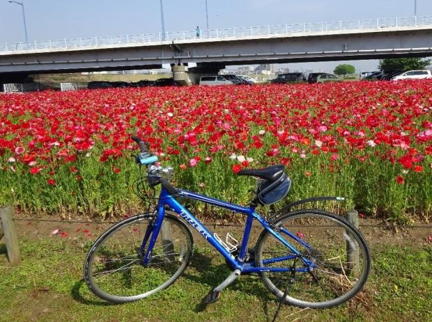 サイクリング5-21 (2)