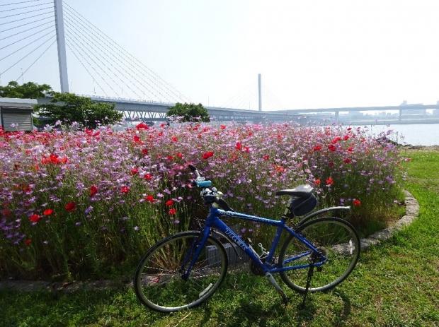 サイクリング5-21 (9)