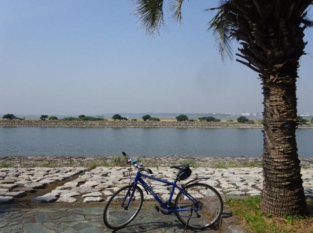 サイクリング5-21 (11)