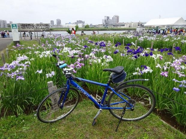 サイクリング@荒川河川敷6-11 (6)