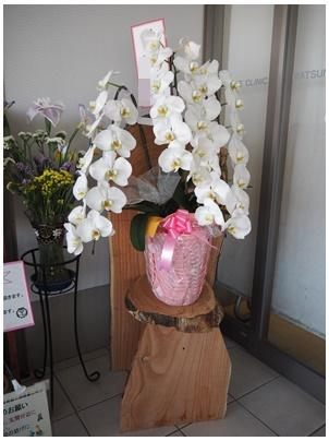 615お花3