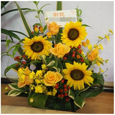 黄色い花3(アステラス)
