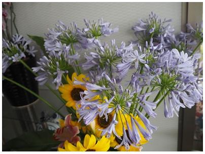 アガバンサスの花3