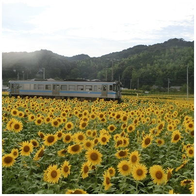ひまわりと電車2