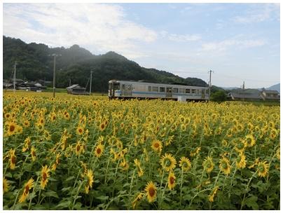 ひまわりと電車3