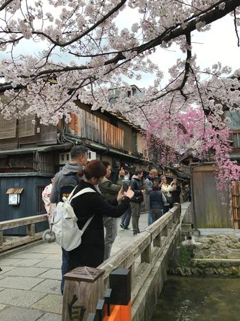 14_桜を撮るみなさん