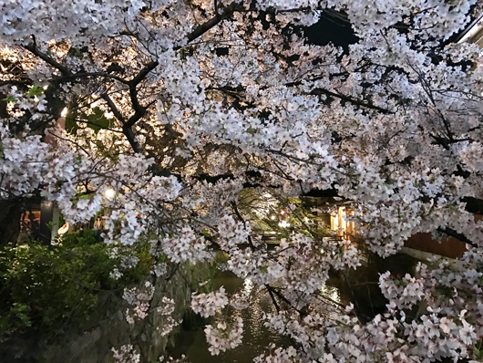 16_祇園の夜桜