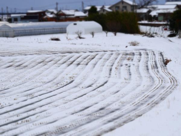 雪景色の田んぼ