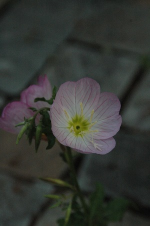 515-f.jpg