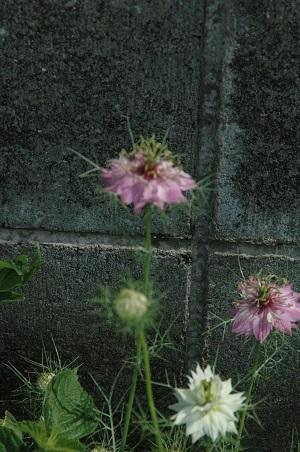 521-f.jpg