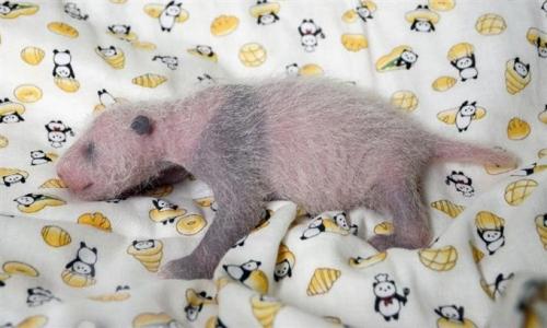 パンダとパンとパンダの赤ちゃん