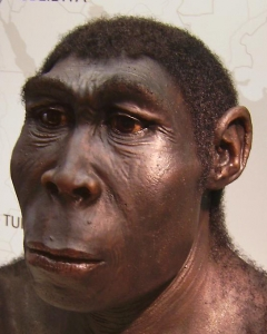 Homo_erectus_new.jpg
