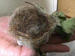 メジロの巣3