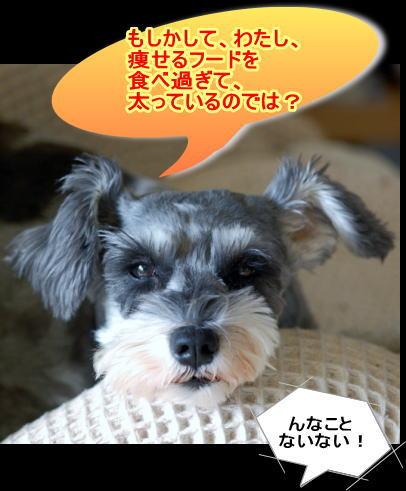 kiku20131016.1.jpg