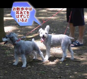 kimumimi20138016a.jpg