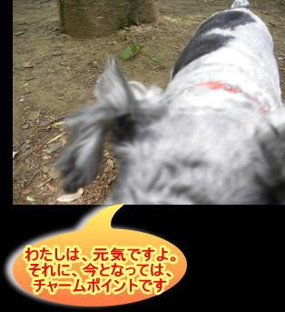 kimumimi20138016c.jpg
