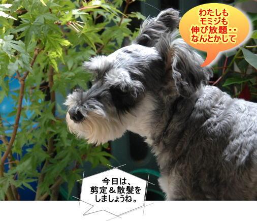 kiku20130618a.jpg