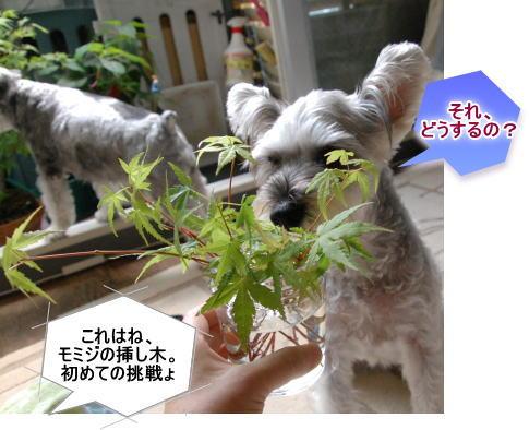 mimi20130618a.jpg