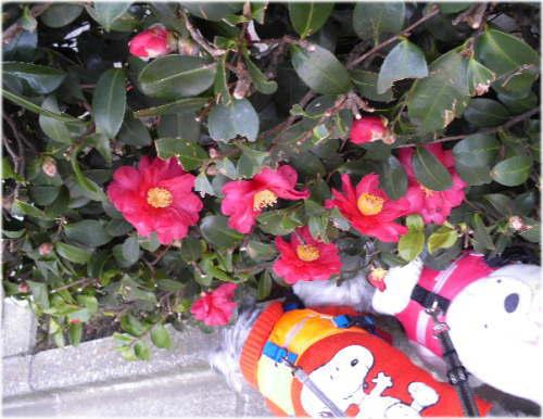 花より散歩