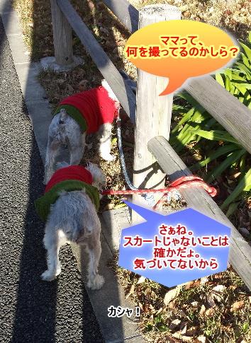 20141218f.jpg